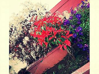 #naturephotography  #panchgani  #lonavaladairies  #enjoyement