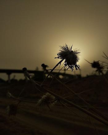 👌👌.. #photography #photographr #photo #phonecamera #coolpadcool1 #great #wonderful #world #indian #rajasthan #jaipurbloggers #nice #cotton #flowers #sun #nature #yellowness #wordsbest #bestever