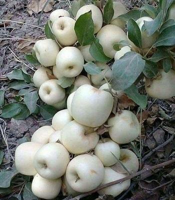 white Apple , pink mango