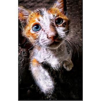 innocent cat 🐱  #catoftheday #cats #catalogueshoot #catlovers #cathkidston #innocent #ugly #uglyme #pets #petstagram #petlover #animallovers #animallove #funny-animation #likeme #followforlike