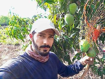 Who loves Fruit Picking? #selfie #selfieoftheday #selfienation #selfietime #frontcam #like4like #followforfollow #ropo-good #ropo-love #ropo-style #roposo #ropo-daily #travel #wanderer #wanderlust #mango #hapus #alphonso #alphonsomango #king #mangoseason #fruit #manpose #hardwork #thankyou