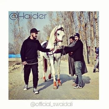 #haider ❤❤ #marwarihorse #zuljana #photography #best #moments