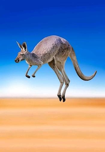 #roposocaptured #captured #kangaroo