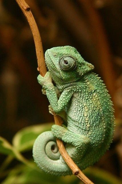 #photographyislifee  #chameleon  #different-is-beautiful