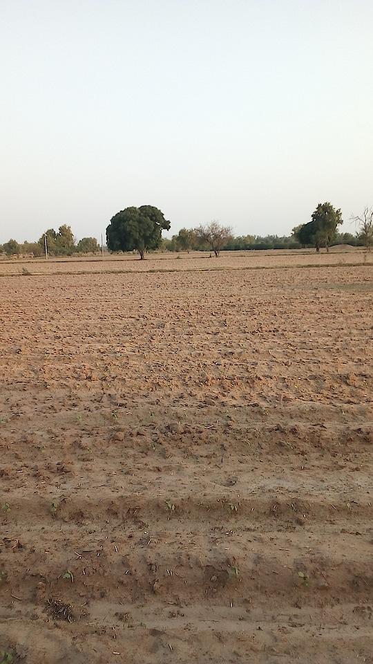 Haryana ke khet