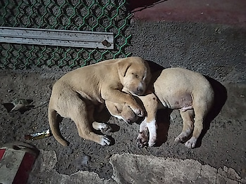 #dogs #roposo-cute #madeforeachother
