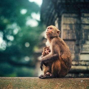 #hussainrani #photographs #gallery #photomaker At Pashupatinath .  #mytravelgram #Kathmandu #NikonAsia #85mm #bestintravel #exploretocreate #OnTheRoadNikon #resourcetravel #lonelyplqnet #indianphotography #incrediblepeople #incredibleindiaofficial #indiapictures #india  #indian #indianphotographyclub  #Mypixeldiary #passionpassport #beautifuldestination #lonelyplanetindia
