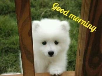 Good morning friends...