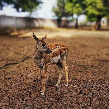 Suno Jony! Ek Pic meri b click kro naaa.... . . . . . . #Haryana #hisar #deerpark #wildlifephotography #Travelblogger #lonelyplanet #animalsmood #moodygrams #indiatravelgram #solotraveler #backpacker