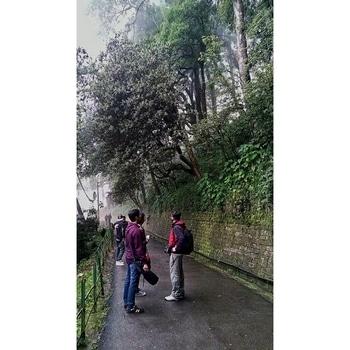 #RoposoTalentHunt #green #nature #path #beautiful #clouds #darjeeling #trip