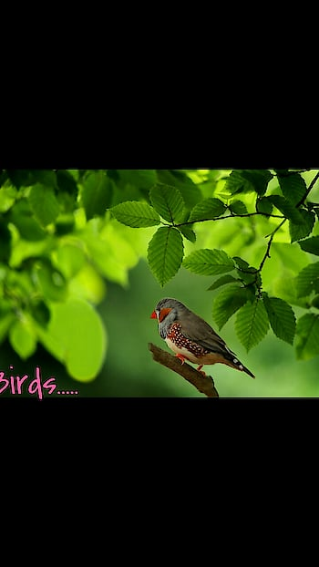 #nature_good .....