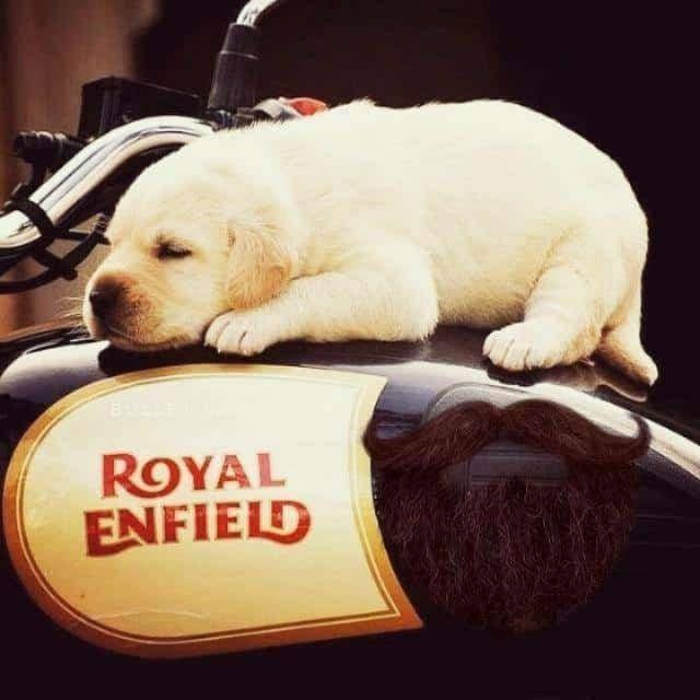 #royal-enfield-lover ..