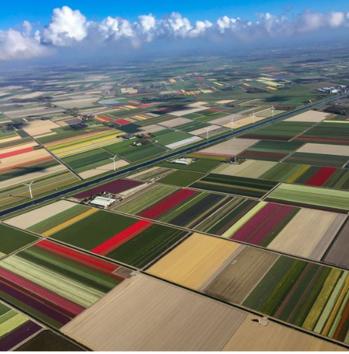 #roposo_wow #tulipgarden in Netherlands #beauty