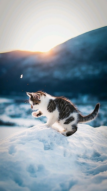 #nature #cuteness-overloaded #snow #wallpapers #wallpaper #cat #mountains