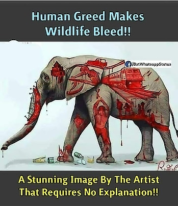 #ropo #roposo #roposostars #ropolife #animallovers #elefant #elefantlovers