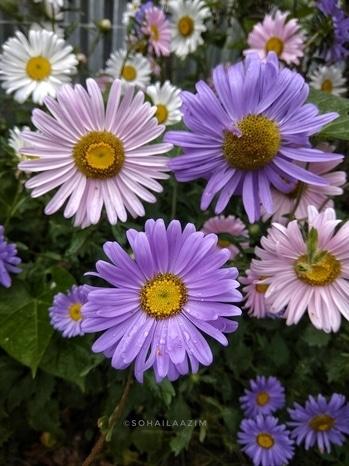 blossoms! #roposotalenthunt #roposomobilephotography #roposophotography #roposophotographer #nature #springsummer #2k17stories