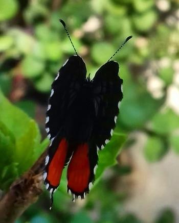 Mini butterfly spotted....#roposotalenthunt #orangeblack #butterfly #naturephotography #myclicks😊😎