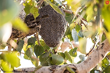 Honey Bees hive 🤤🤤🤤 #honey #bee #hive #naturephotography #nature #photography #photo #bees #exposure #like4like #follow #insta #instame #support #supportme #reposter #repostapp #repost