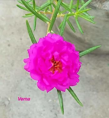 red grass flower