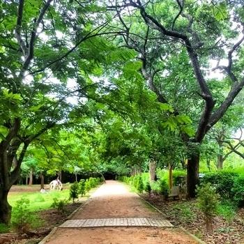 cubbon #park #naturephotography #nature  #roposotalenthunt