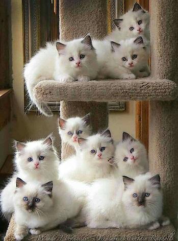 Cute kittens.....