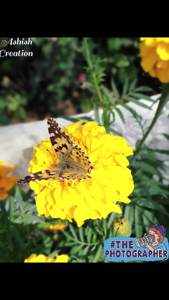 #photoshoot #photoshoot #natualbeauty #butterfly #flowers #day#summer#follow#click#love