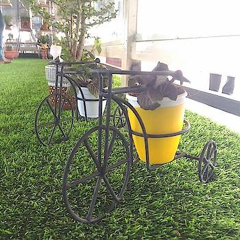 #plantlovers#nursery#garden_explorers