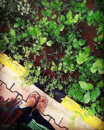 #feetphotography #feetlove #photographyislifee #love-photography #naturephotography #savetrees #planttrees #lookingatnaturemakesmehappy