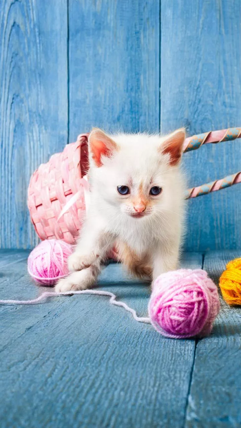 #cat #kitty #white #whitecat #fluffy #smily #brave