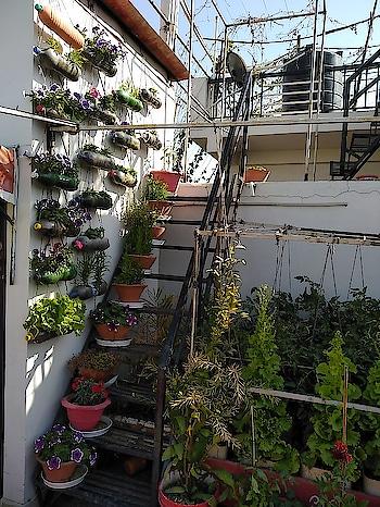 #garden#naturalbeauty#greenary