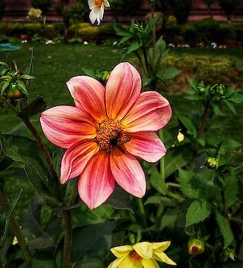 Love this #Shot . . . . . . #potrait #Kashmiri #india #travel #flower #portraitshot #mobilephotography #oneplus5t #artistsoninstagram #portraitoftheday #photooftheday #morningmotivation #wildlifephotography #naturephotography #exploretheworld #lonelyplanet #sodelhi