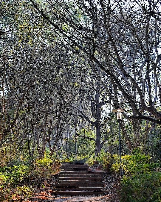 #nature #photographylife #photo #photo-roposo #stairs #roposo #roposo-new #captured #capturedchannel #roposotalent #roposotalent