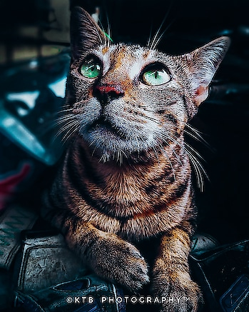 #photography #photographylover #cats #catlover #editing #adobe #adobelightroom #adobephotoshop