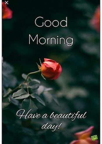 #morning #morningpost #goodmorning #goodmorningpost #goodday
