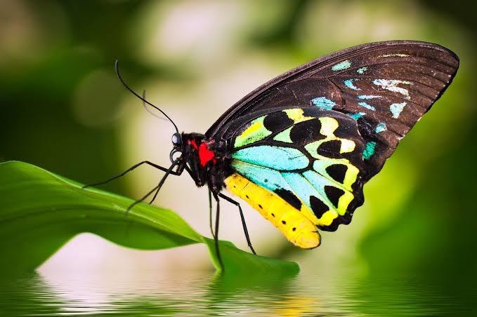 #butterflywings