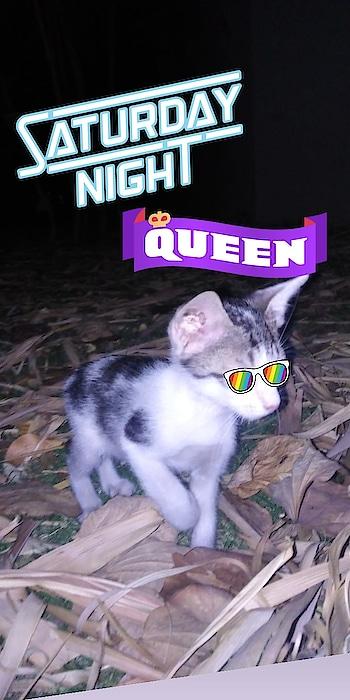 Kitty #cute_cat #kitty
