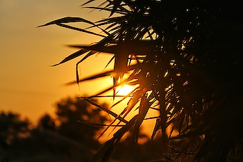 #landscape #landscapephotography #nature #sunset #sunsetvision #photographyart #photographyeveryday #wallpaper