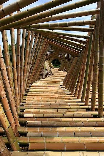 Awesome Bamboo bridge #bamboos #bamboo #bambooforest #bambooisland #bambooblonde #bambooart #bamboo_bridge #engineering #architecture #nature #trees #lovenature #brides #travel