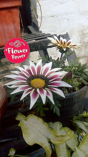 Seasonal flowers..!!🌸💐 #lucknow #flowerpower #whiteflowers  #lucknowbakers #lucknowgirl  #lucknowblogger #lucknowyoutuber #lucknownawabs