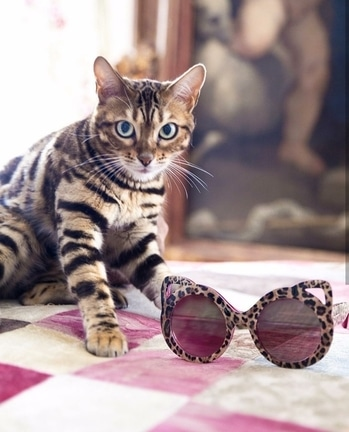 Want!! The cat and the sunglasses. The new feline collection by #D&G.  #catlover #beautifulcat #animalprint  #fblogger #fashionblogger #styletips #styleideas #personalstyle #personalstyleblogger #fashionideas #fashionblogger #fashiontips #trending #newideas #styleinspo #styleideas #fashiontips #styletips #fashioninspo #styleideas #styleinspo #makeup #eye-makeup #cute #stripes #floral #dolcegabbana #sunglasses #brands #highfashion #appetiteforstyle
