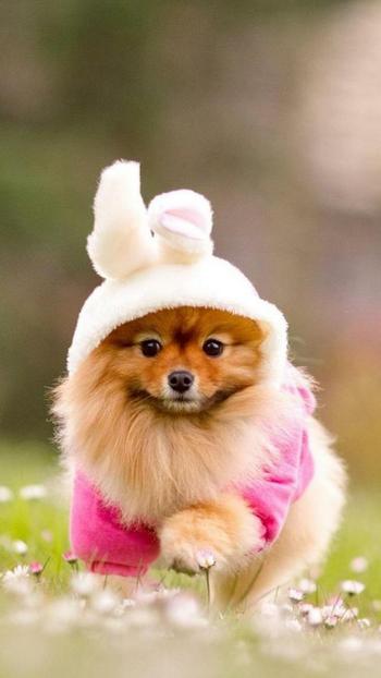 #beautiful #animallover #animal #pets #puppy #cute #fluffy