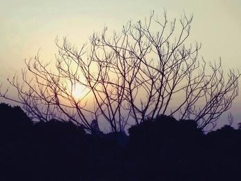 #Kotdwara #India #Uttarakhand #tree #nature #dawn #sunset #landscape #sky #silhouette #evening #dusk #outdoors #silhouetted #sun #branch #light #backlit #weather #environment #panoramic #flora