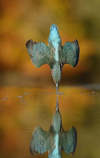 Best captured photos #kingfisher #captured #roposocaptured