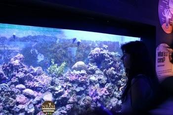 Water is the driving force of all nature 🌊🍃 ~ Leonardo da Vinci 🌸 #stayandwonder #coralreef #nbamtravels  . . . . . . . . . . . .. . . . . . . . . . . . . . . . . . . #aquaria  #kualalumpur  #naturalbeautyandmakeup  #travelblogger  #travelblog  #travellover  #travelphoto  #roposotravelling  #roposofeed  #travelgram  #travel-diaries  #tour  #tourist  #globetrotter  #roposotravel  #dslrphotography   #beautifulplace  #iamatraveller   #roposodailyfiles  #travelogue  #ropossotraveller  #globe_travel  #aroundtheworld  #worldcaptures  #followme  #f4follow  #malaysia