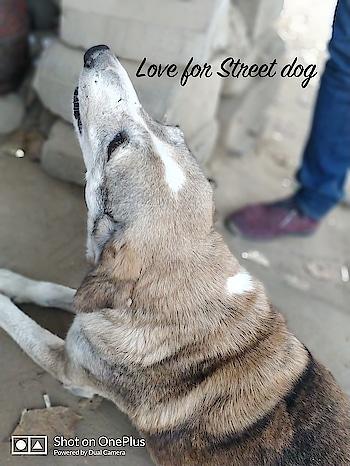 #stray #straydog #homeless #newfriends #streetdog #mutt #spying #lapaz #welovemutts #instadog #instapet #dogstagram #dog #openpet #dogsofinstagram #viralatas #adote #adopt #adoptdontshop #me #amordequatropatas #diadafofura #sendadogphoto #adotarétudodebom #cachorro  #adotei #euamocachorro #fridayfeeling #roposo